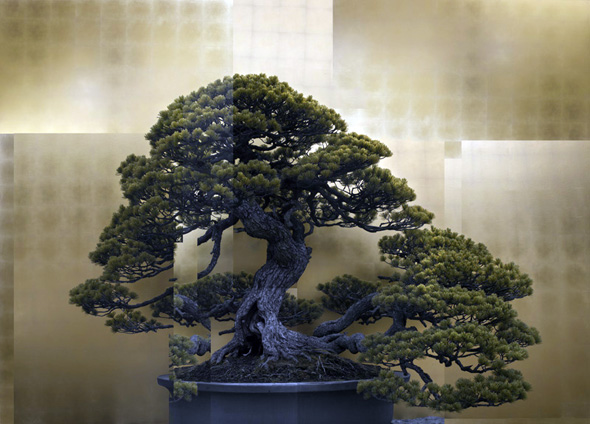 Выставка современной японской фотографии «Новые горизонты ...: http://www.be-in.ru/events/25661-contemporary_japan_photography/