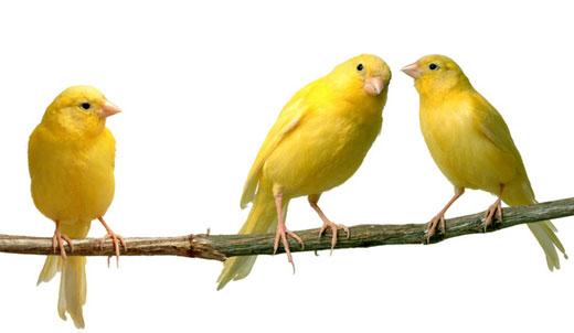 Жизнь в цвете: Желтый | ФОТО НОВОСТИ - LoveOpium ru